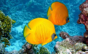 fish-bright-yellow-2